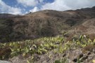 Cactii And Terraces, Imada