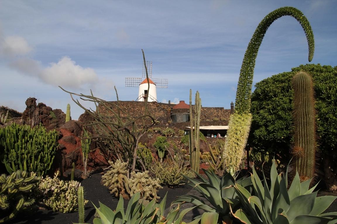 Cactuses jard n de cactus guatiza for Jardin de cactus lanzarote