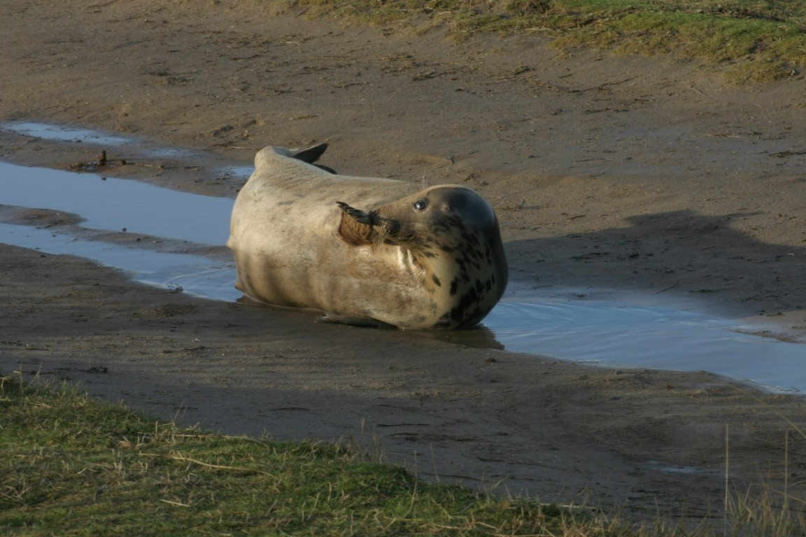 Typical Seal
