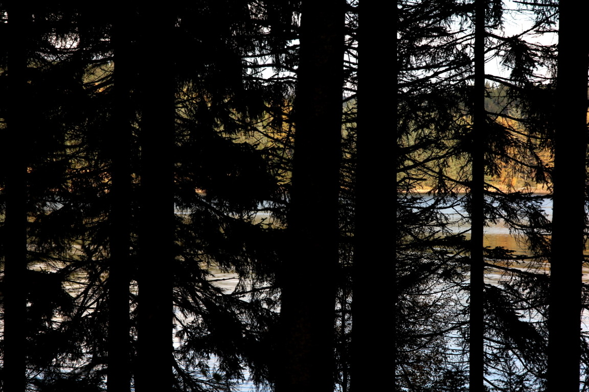 Trees, Kielder Water