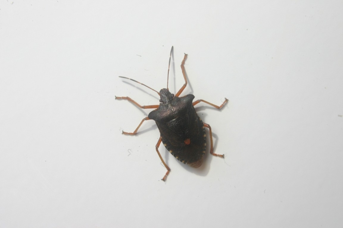 Some Kind Of Beetle