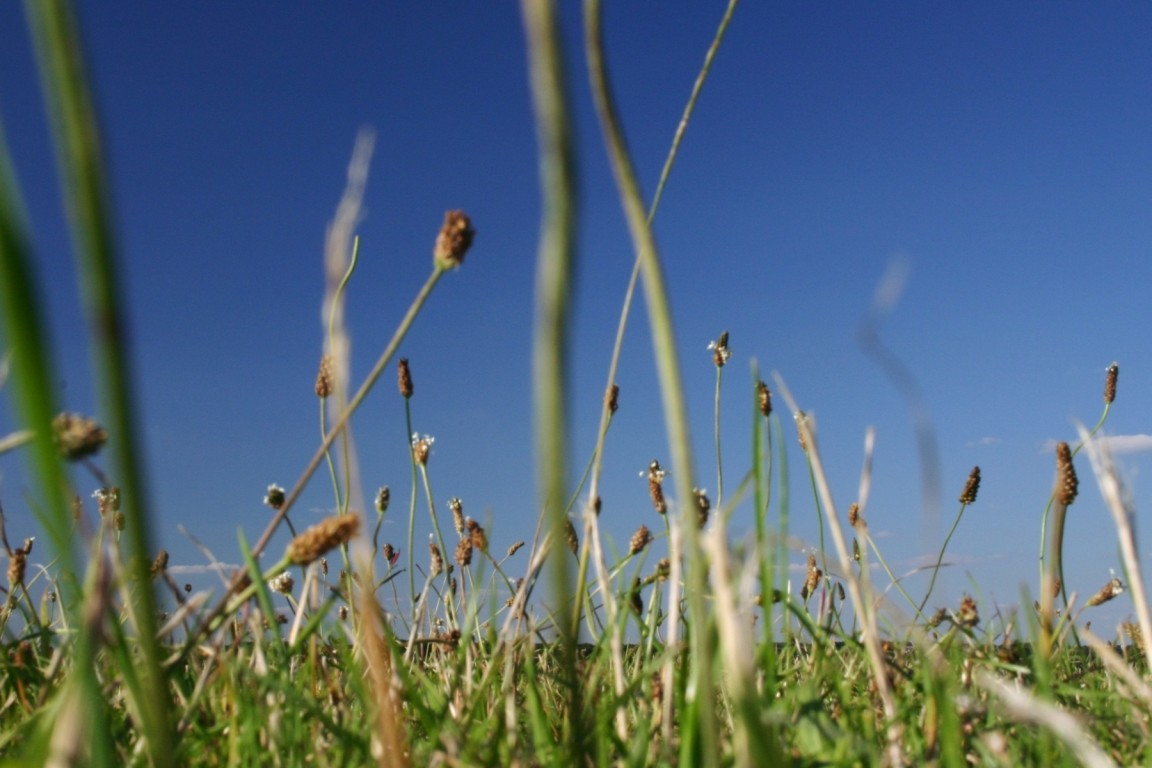 Grass At Stonehenge