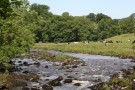 River Wharfe Near Burnsall