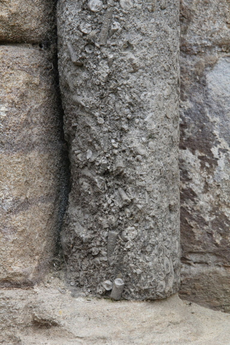 Fossilised Shells in Stone Column, Fountains Abbey