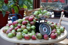 A Tiny Proportion of This Year's Apple Harvest