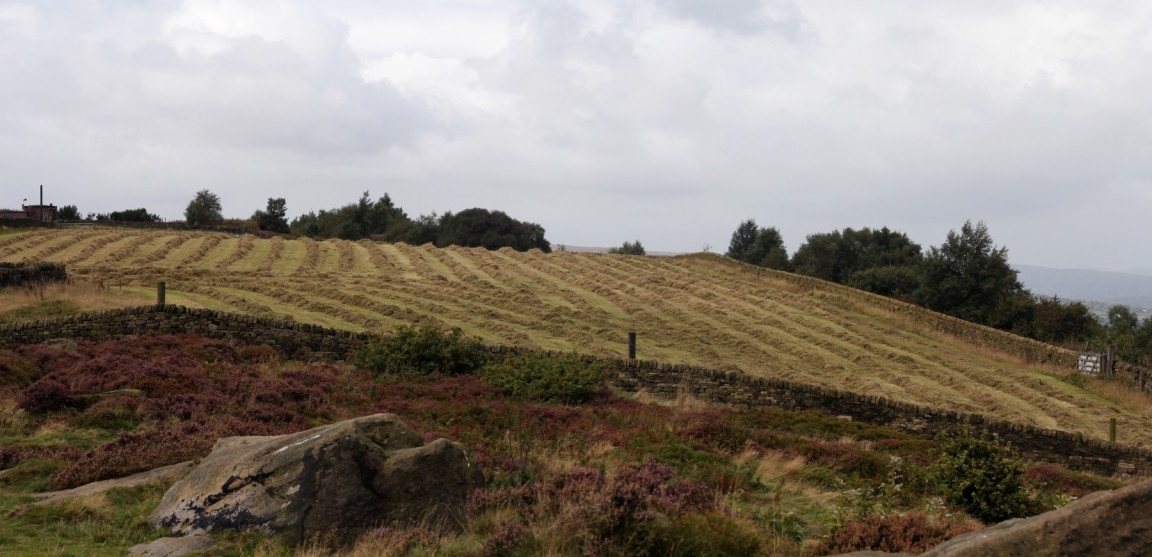 Hay Drying in Field, The Chevin