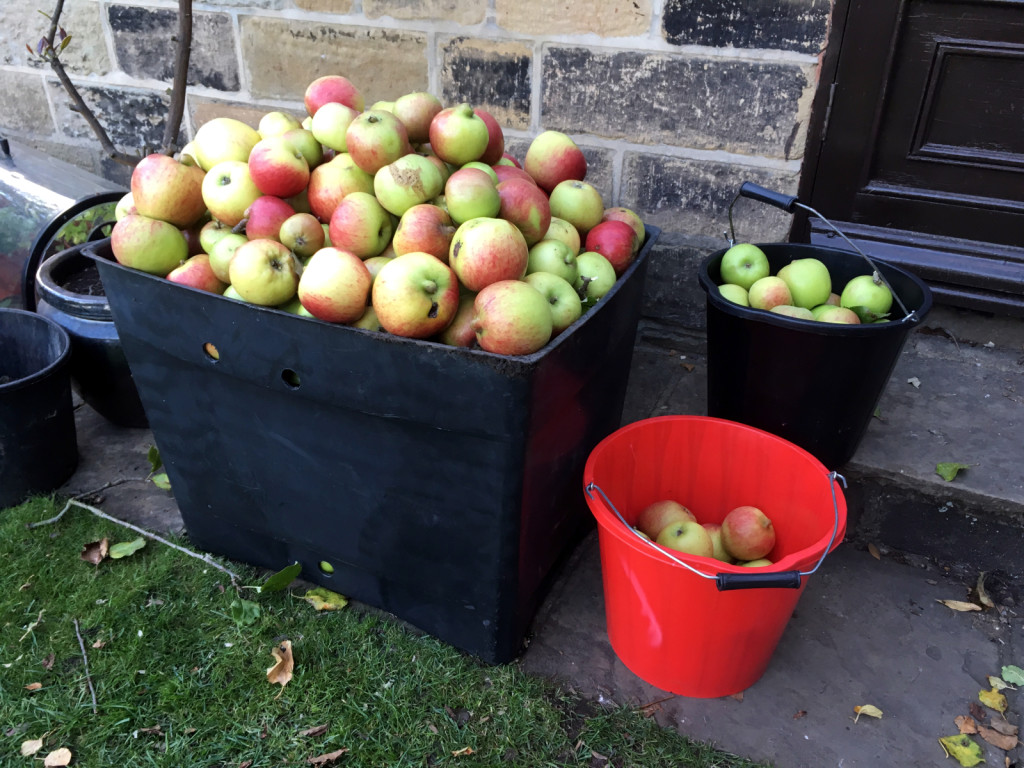 Small Part of Apple Harvest