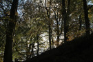 Sun-Tinged Trees, Strid Wood, Bolton Abbey, North Yorkshire