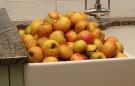 Cider Making - Apples in Sink