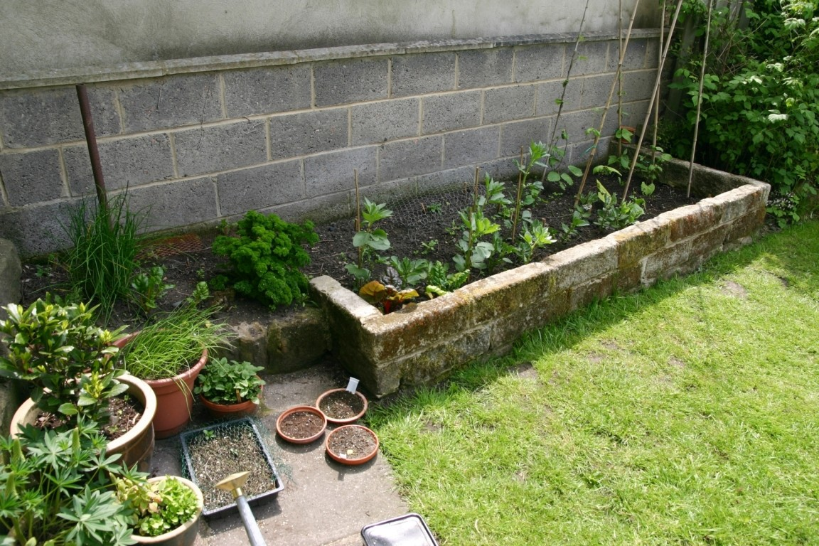 Herbs And Beans And Spring Onions