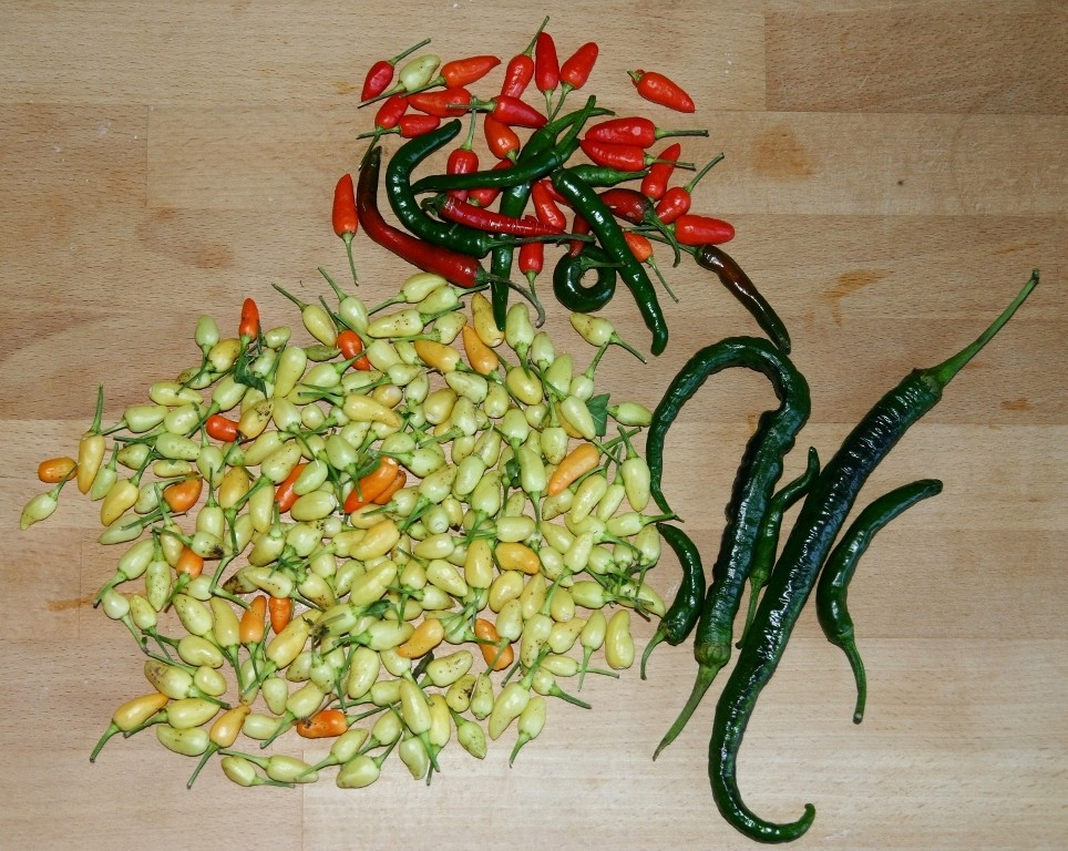 LOTS Of Chillies - Prairie Fire, Pinocchio's Nose, And Some Generic Chilli