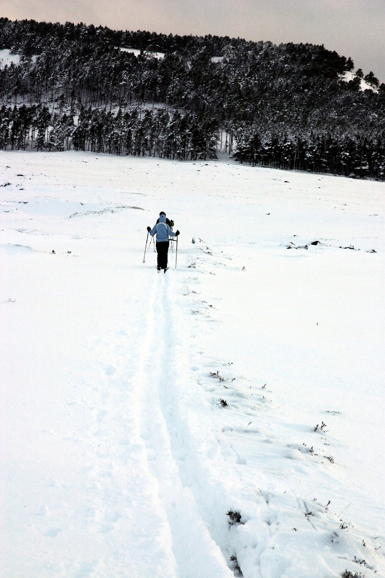 Debbie Cross Country Skiing, Balmoral Forest